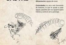 ORNITOMORFA / Serie de ilustraciones ligadas a unas esculturas.