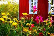 Vanha punainen talo / Kesä