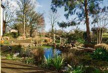 Amazing Gardens / Gardens that are stunning or secret.