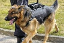 Police Dogs / A Good Dog Day in the Life of a Police Dog