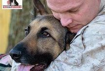 Veterans Dogs / A Good Dog Day in the Life of a Veteran's Dog.