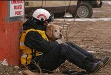 Search & Rescue Dogs / A Good Dog Day in the Life of a Search & Rescue Dog