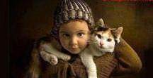 ¡Gatos/Cats!