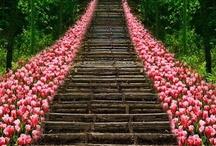 Stairway to Heaven / by ༺♥༻Karen G.༺♥༻