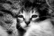 Cats Cats & more Cats / by ༺♥༻Karen G.༺♥༻