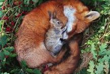 Bunnies and Foxes / Cute pics of real or imagined bunnies and foxes.