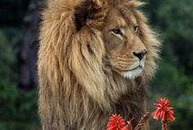 Beautiful animal pics / Animals