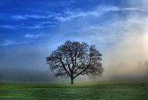 Bomen en bos