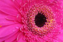 Roze - rozer - rozest