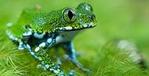 Frogs and Reptiles