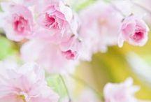 :: spring :: / by necserc mikazuki