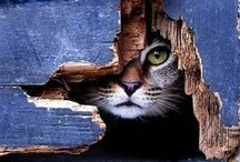 Cats: most beautiful creatures in the world.