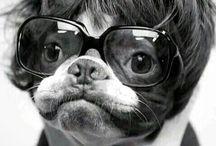 Dogs & Pugs