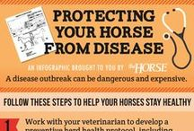 Helpful Horse Tips / Learn more about horse breeds, treatments for injuries and illnesses, and more with our saved infographics
