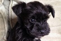 Puppies / Puppies