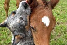 Foal / Foal