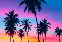 Palms / Palmer