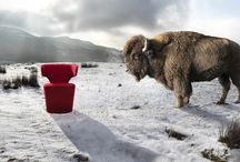 Product: Bison / Designed by Simon Pengelly