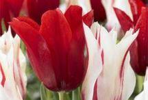 Flowers / by Linda Marks-McFarland
