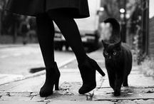 | ♥ | Cat