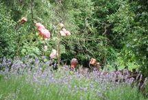 My Garden at the Elbe / Zahrada u Labe / Moje zahrada