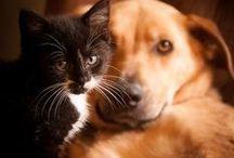 Dogs and cats / psy i koty