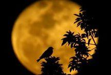 Moon / Księżyc
