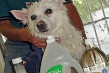 Pet care and ideas