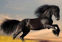 rugby e animali mon amour / IL CORAGGIO LA LEALTA LA SOPRAVVIVENZA di ogni animale quelli soprattutto CANI E LUPI  e uomo e I CAVALLI e la corsa alla morte CI VEDO IL CAMPO DI RUGBY ...... .......  Rugby e Animali mon amour <3 ......