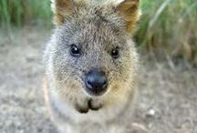 HAPPY EVERYDAY / Feeling down? Think about Quokka!