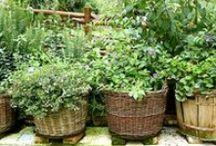 koření a bylinky / koření a bylinky