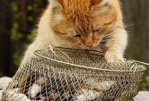 kočičí alotrie / kočičí alotrie