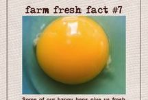 FARM FRESH FACTS / Fascinating information long forgotten. So, we will do our livestock justice, by reminding you and enticing you to support real farming.