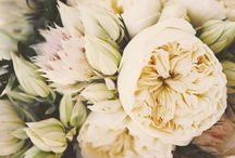 Fiore / Flower power!
