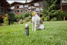 Pet Friendly / If you are looking for pet friendly hotels in Washington State you have found one. We are decidedly pet friendly. Just check out http://www.alderbrookresort.com