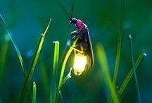 Bugs and insects / Belőlük van a legtöbb
