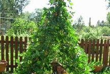 Cool gardening ideas / pics of some innovative gardening ideas