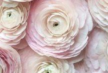 Inspiration for Wedding Flowers / By Nathali & Elian Juli 2016.