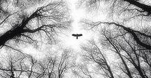 Fokus: Schwarz Weiß / Inspiration und Ideenfindung für ausdrucksstarke Schwarz Weiß Fotografie.