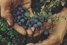plants / by Bea Herzberg