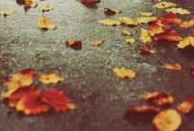 Fall / by Meredith Bangay