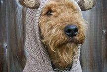 Hint hint...knit knit