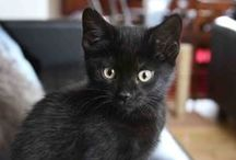 Black cats ♥ / My own cats and other people´s cats! ;)