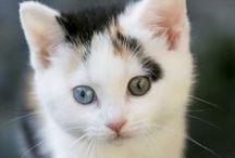 Cats & Kittens ♥
