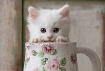 White cats / or almost white! ♥