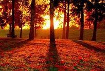 -Follow the sun-