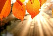 .Float down like Autumn Leaves. / the season that I love the most