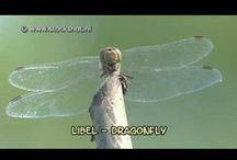Insecten - Insects / Biotoop & Gedrag - Environment & Behaviour