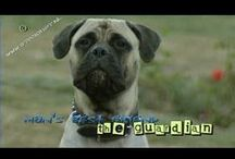 Huisdieren - Pets / Gedrag & Opvoeding - Behaviour & Parenting