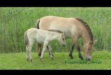 Landbouwhuisdieren - Livestock / Gedrag & Omgeving - Behaviour & Environment